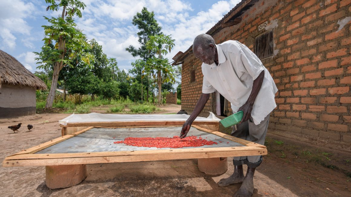 Solar Drying Technologies: A Piece of the Puzzle in Reducing Food Loss